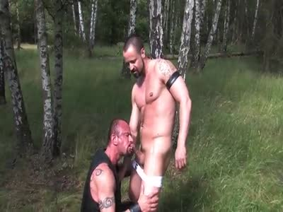 Euro Forest Pigs