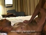 Gay Porn from BlackBreeders - The-More-Wade-Nuts