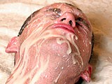 gay porn One Big Nasty Facial Action || Horny bald dude gave his boyfriend nice anal hole fucking with big cumshots. See his cum squirts out in his asshole and covering his face in this bareback fucking action.