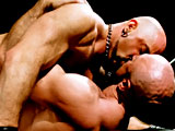 gay porn Shane Alexander &  || These two men are so fuckin' big they've got their own zip codes! Solid as granite and covered in fur and tattoos, the pair of mammoth gym-bulls dispels all those rumors about big guys not being limber enough for cock-crazed sex. Buff stud Shane Alexander and mammoth bodybuilder Xerxes are the two beasts in question. It is a pairing of such physical and horned out enormity that it will probably require several viewings to completely absorb it all.