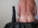 Big Dildo Horse 500x65-85mm In My Ass