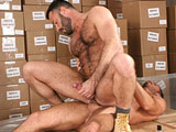 gay porn Damien Stone And Wilfr || Perfectly bearded and furred stud Damien lubes up his tool and strokes it well while coworker Wilfried is watching from behind the shelving. It doesn't take long before Wilfried wants in on the action and approaches, first making out with Damien, and then licking, sucking and swallowing the giant package that got him excited. After blowing the ripped stud, Wilfried wants to ride him, and Damien lies back on some boxes allowing Wilfried to sit his hairy ass down on Damien's pole in reverse cowboy to receive every inch.