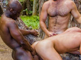 gay porn Lords Of The Jungle - Part 4 || Matt Cole takes a pounding from both Collin and Jay outdoors
